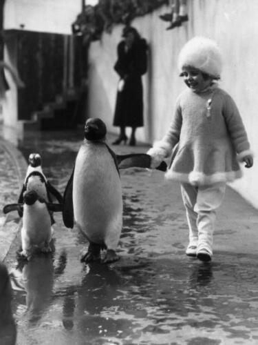 Penguin's are a Girl's Best Friend